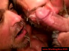 Two straight mature bears share facial